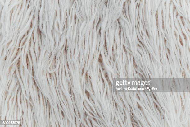 Full Frame Shot Of White Dog Hair