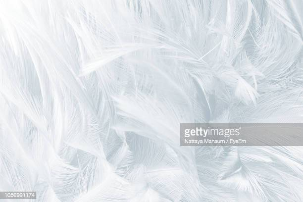 full frame shot of white feathers - piuma foto e immagini stock