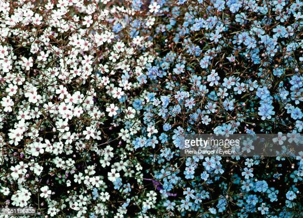 full frame shot of white flowering plants - flower head stock pictures, royalty-free photos & images