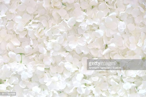 full frame shot of white flowers - blütenblatt stock-fotos und bilder
