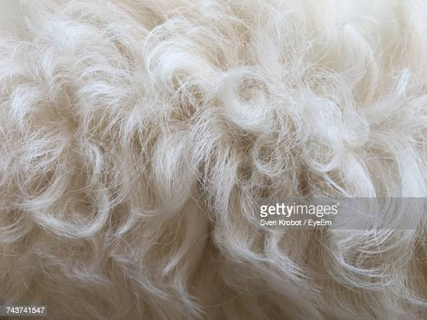 Full Frame Shot Of White Hairy Dog