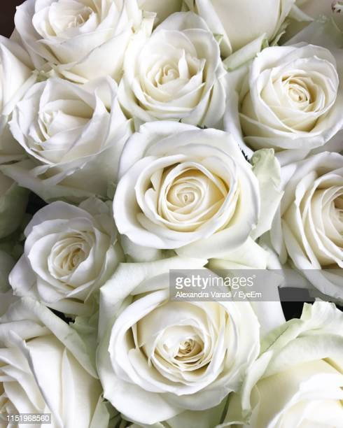 full frame shot of white roses - alexandra blanc photos et images de collection
