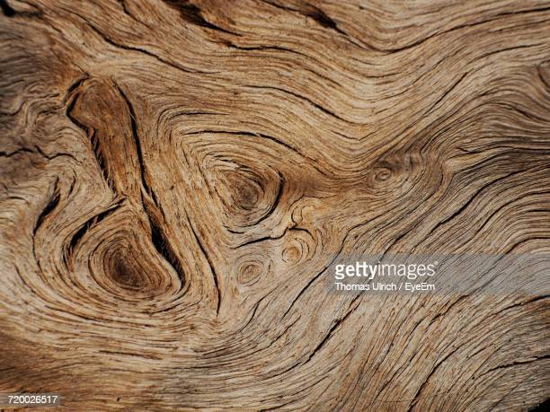 full frame shot of wood - tree trunk stock pictures, royalty-free photos & images
