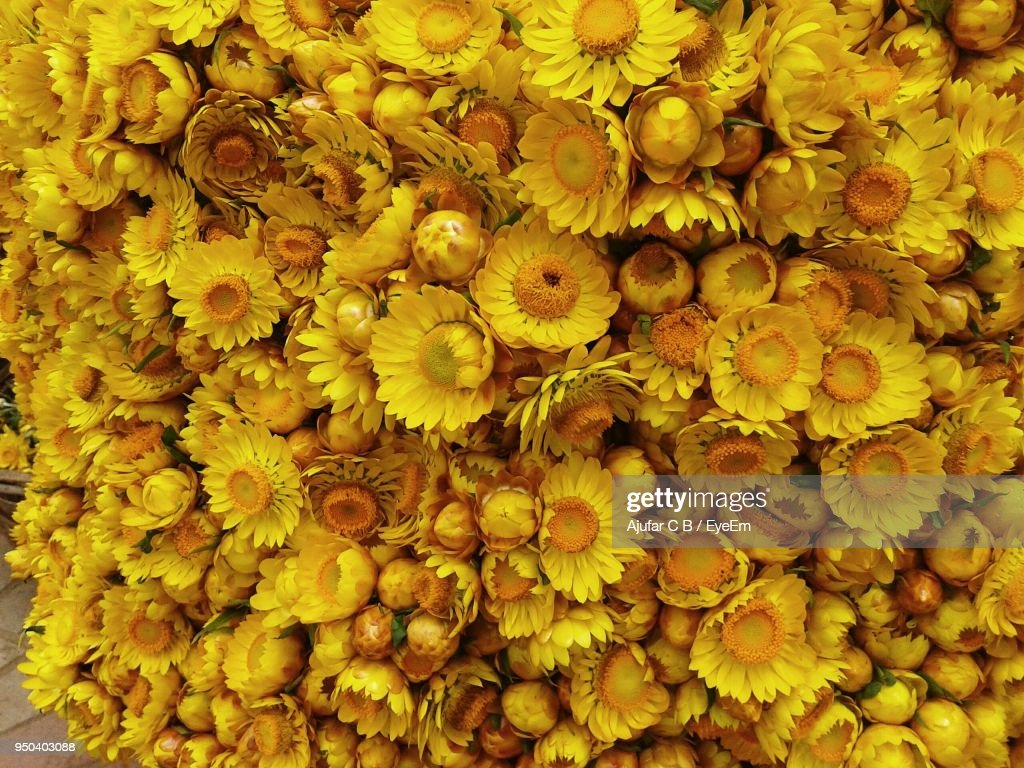 Full frame shot of yellow flowers blooming outdoors stock photo full frame shot of yellow flowers blooming outdoors mightylinksfo Choice Image