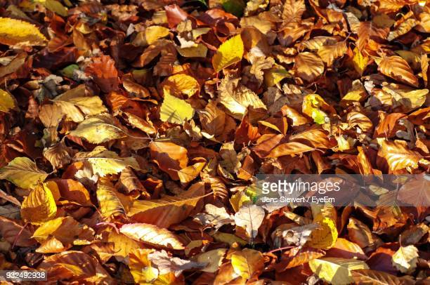 Full Frame Shot Of Yellow Maple Leaves On Field