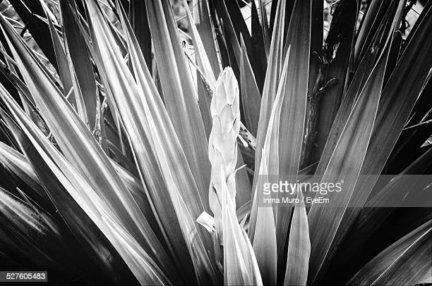 full frame shot plant leaves - muro stock photos and pictures