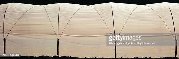 full frame view of exterior of shade house structure - timothy hearsum stockfoto's en -beelden