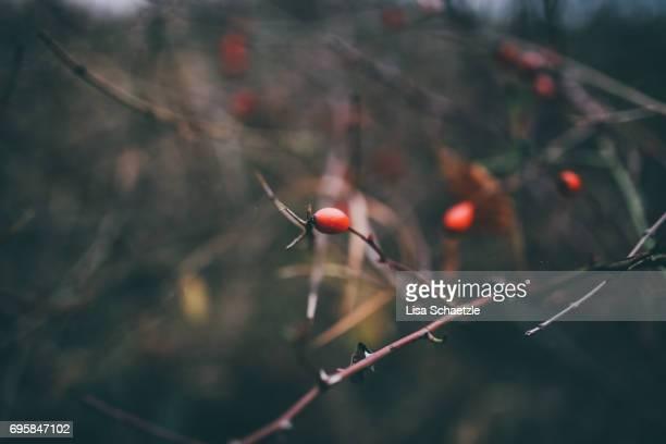 full frame winter background - ruhige szene stock pictures, royalty-free photos & images