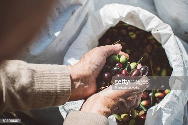 Full hands of olives