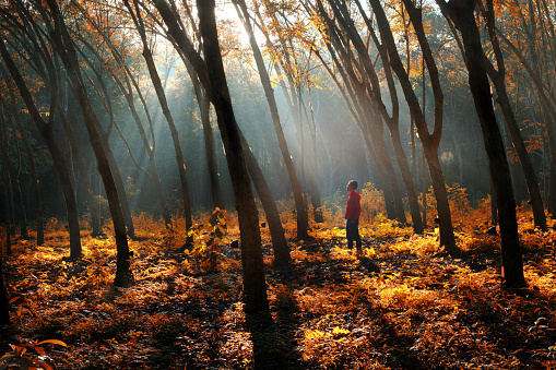 Full lenght of happy man standing in sunbeams bursting through misty autumnal woodland - gettyimageskorea