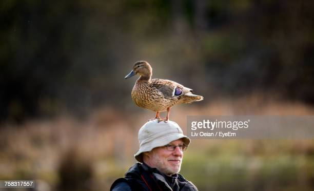 full length of a bird - duck bird stock photos and pictures