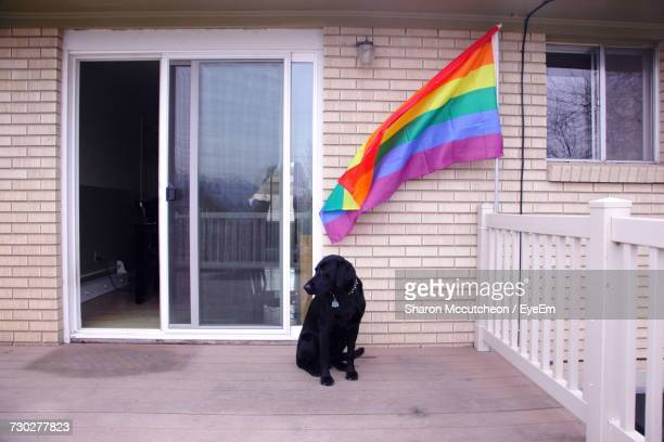 full length of a dog on porch with rainbow flag - pride flag stock pictures, royalty-free photos & images