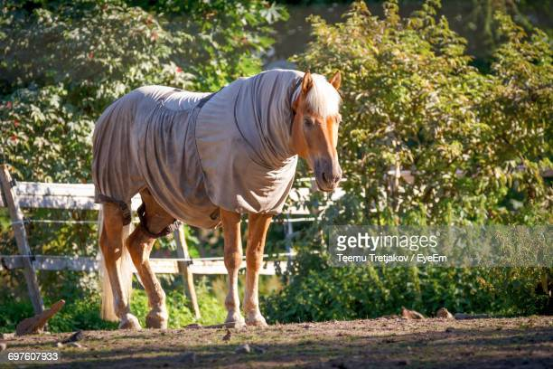 full length of a horse - teemu tretjakov stock pictures, royalty-free photos & images