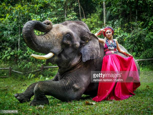 full length of a young woman and elephant on land - indian elephant stock pictures, royalty-free photos & images