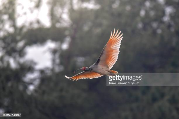 full length of bird flying outdoors - {{relatedsearchurl('london eye')}} stock photos and pictures