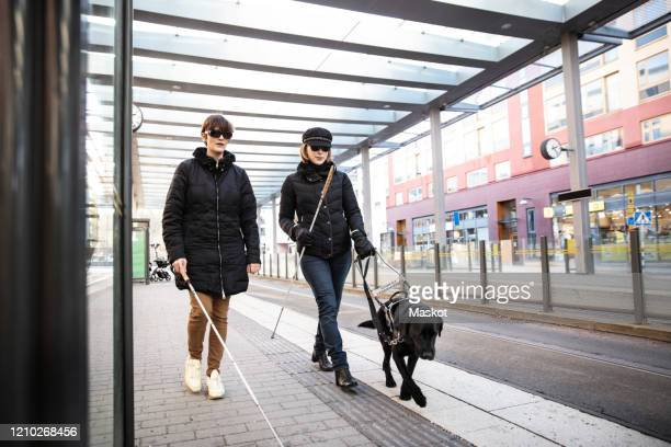 full length of blind woman and friend walking on sidewalk with guide dog in city - 視覚障害 ストックフォトと画像
