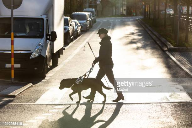 full length of blind woman with guide dog crossing road in city - disabilitycollection stock-fotos und bilder