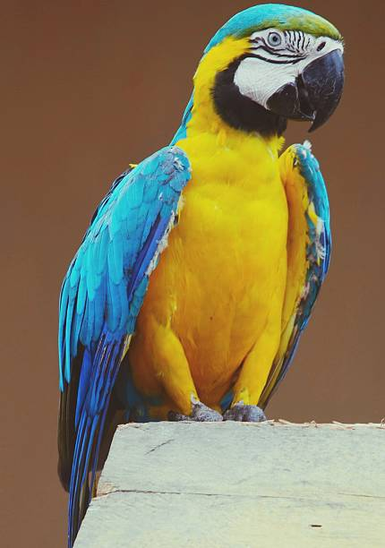 Full Length Of Blue And Yellow Macaw Wall Art