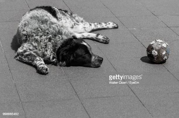full length of dog lying by abandoned ball on footpath - walter ciceri foto e immagini stock