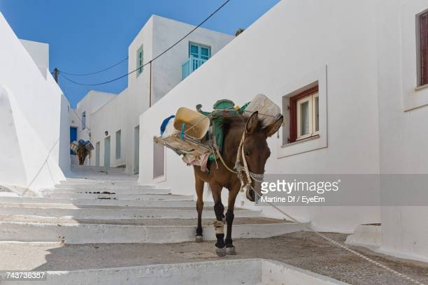 Full Length Of Donkey In Greece