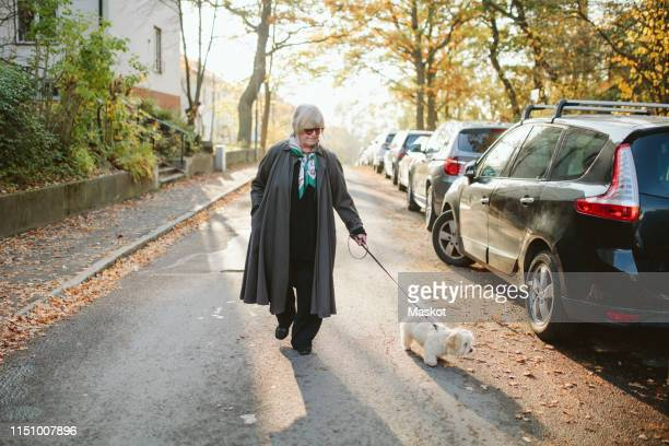full length of elderly woman walking with dog on road during autumn - 愛玩犬 ストックフォトと画像
