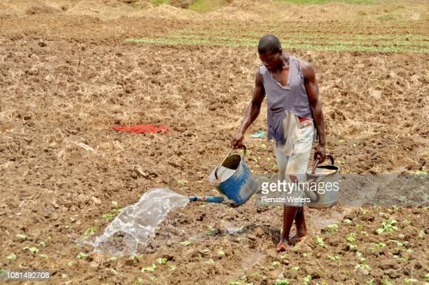 full length of farmer watering on land - ghana africa fotografías e imágenes de stock