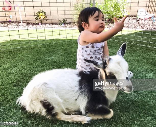 Full Length Of Girl Playing With Goat On Grass