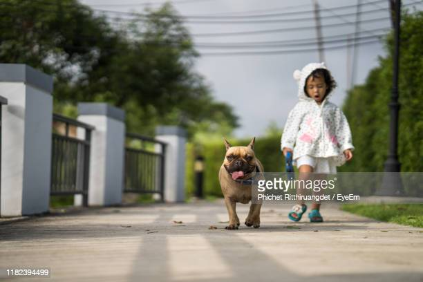 full length of girl walking with dog on footpath - phichet ritthiruangdet stock photos and pictures