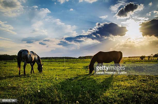 Full Length Of Horses Grazing On Field Against Cloudy Sky During Sunset