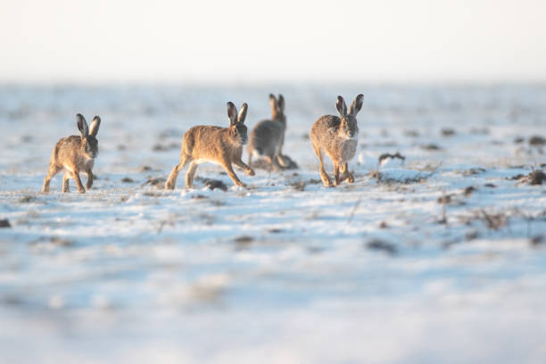 Full length of kangaroo on field,Eemnes,Netherlands