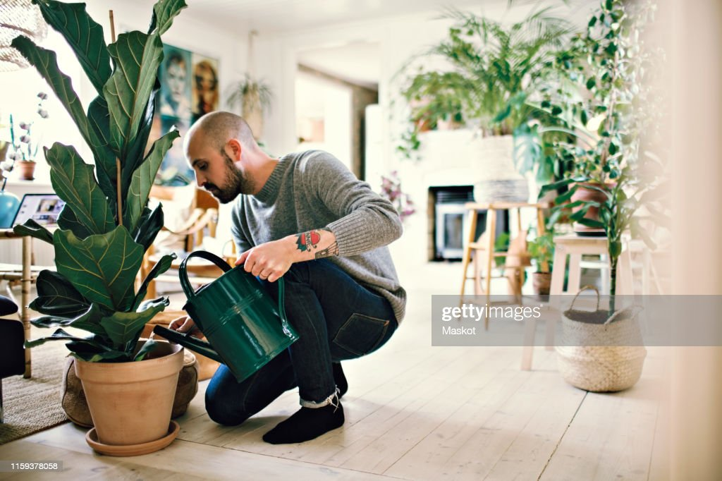 Full length of man kneeling while watering potted plant at home : ストックフォト
