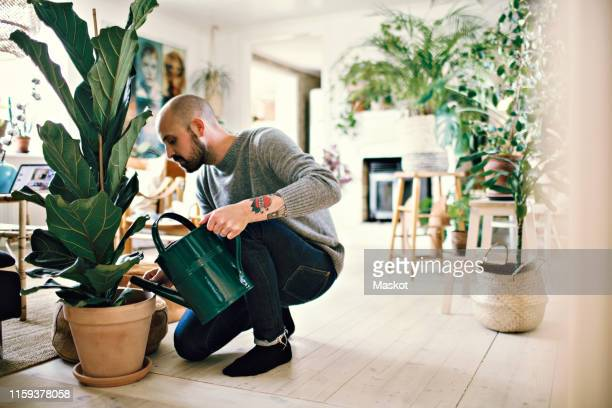 full length of man kneeling while watering potted plant at home - pflanze stock-fotos und bilder