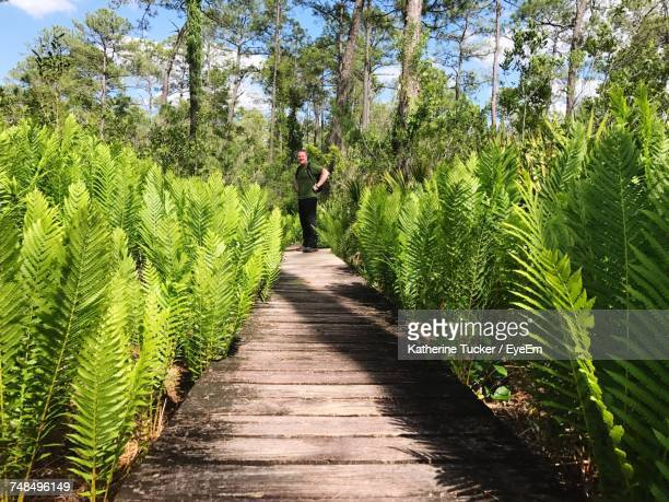 Full Length Of Man Standing On Boardwalk Amidst Plants At Ocala National Forest