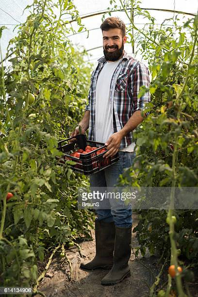 Full length of man with basket of tomatoes in greenhouse.