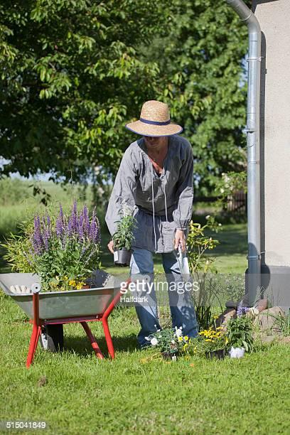 Full length of mature woman loading flower pots in wheelbarrow at garden