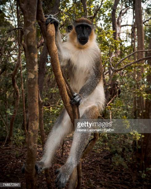 Full Length Of Monkey Sitting On Branch In Forest