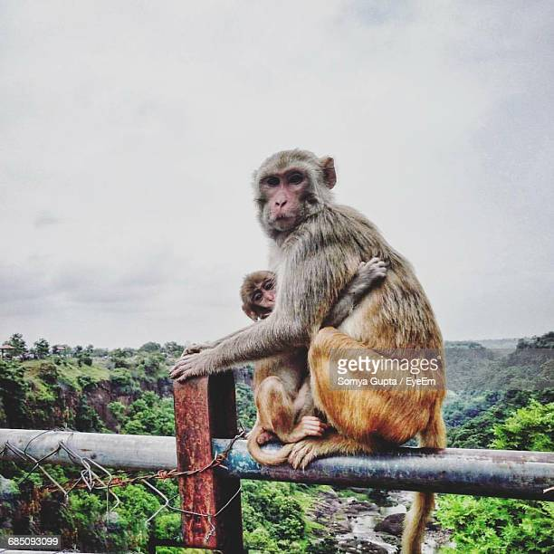 Full Length Of Monkey With Infant On Metal Railing By Mountains Against Sky
