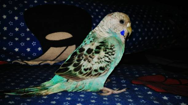 Full Length Of Parrot On Sofa At Home