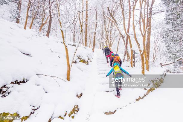 Full Length Of People Hiking Amidst Bare Trees On Snow Covered Landscape