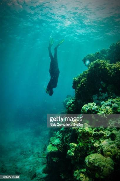 full length of scuba diver swimming in sea - cairns stock photos and pictures