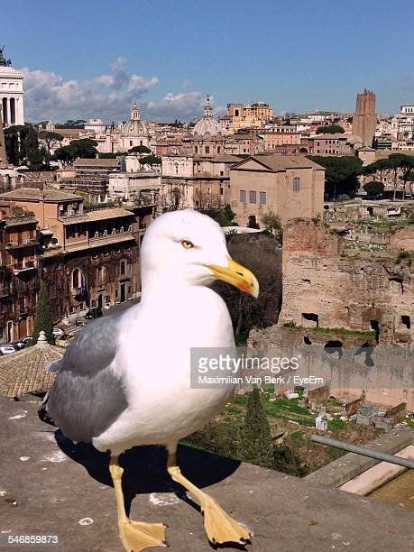 Full Length Of Seagull With Cityscape In Background
