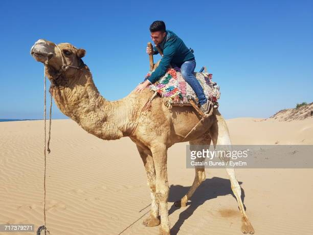 Full Length Of Smiling Man Riding Camel At Sahara Desert Against Clear Blue Sky