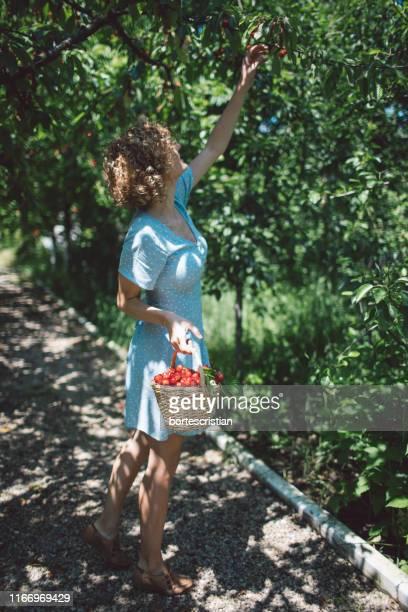full length of woman picking strawberries - bortes imagens e fotografias de stock