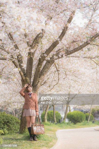 full length of woman standing on cherry blossom - wuhan stock pictures, royalty-free photos & images