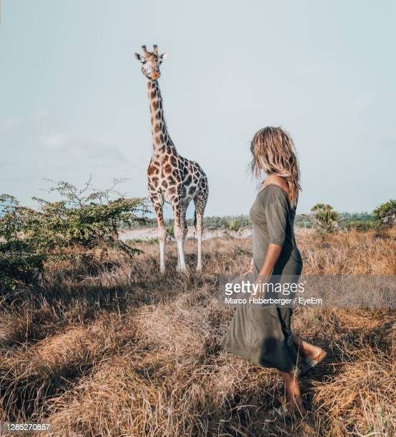 full length of woman standing on field with giraffe - mombasa stock pictures, royalty-free photos & images
