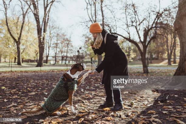 full length of young woman and boxer dog with handshake at park - coat stockfoto's en -beelden