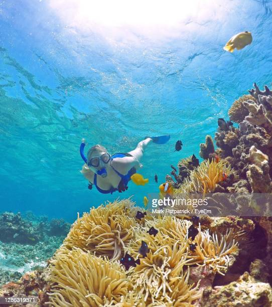 full length of young woman swimming in sea - underwater stock pictures, royalty-free photos & images