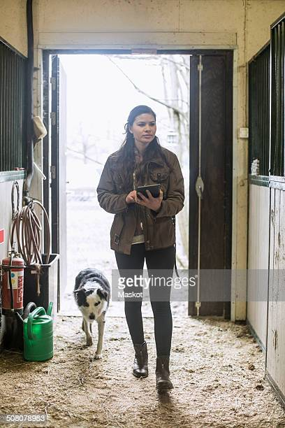 Full length of young woman using digital tablet in horse stable