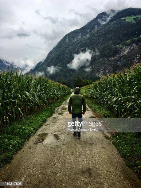 full length rear view of man walking on footpath - human back stock pictures, royalty-free photos & images