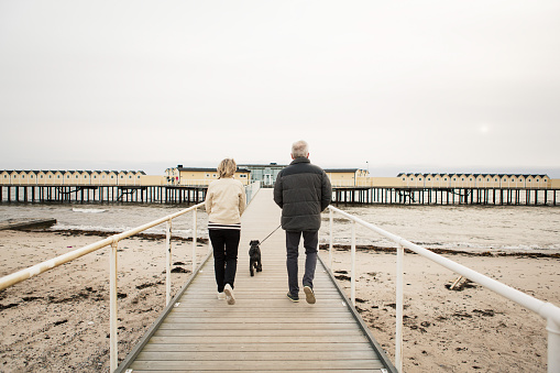 Full length rear view of senior couple walking with Schnauzer on boardwalk at beach against clear sky - gettyimageskorea